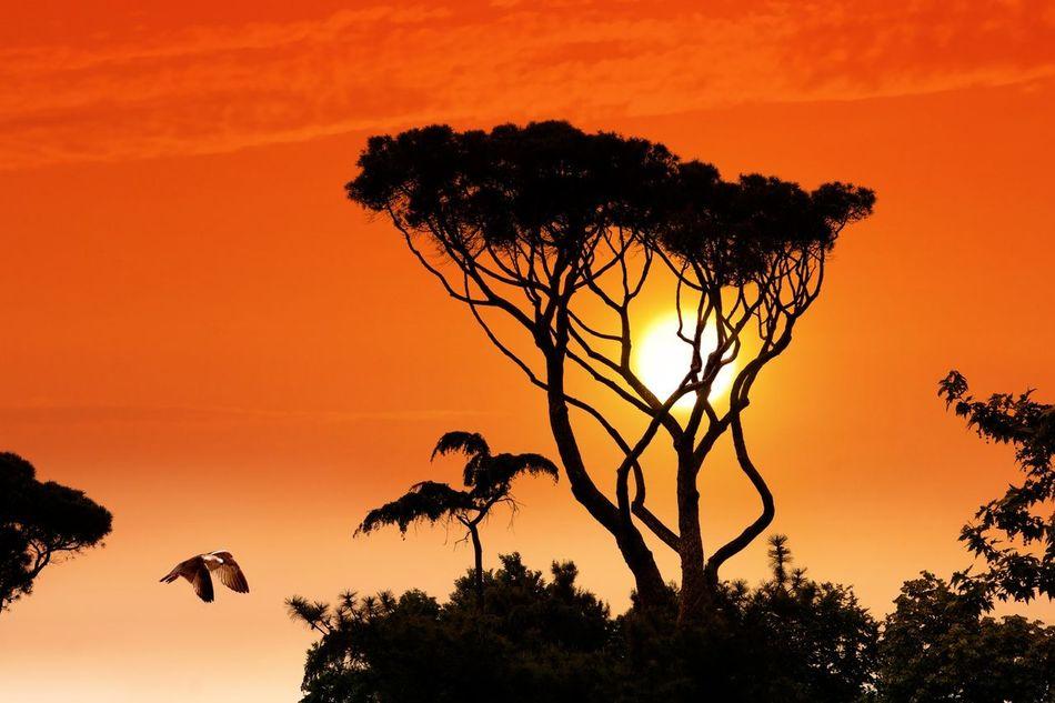 Sunset set Sunset #sun #clouds #skylovers #sky #nature #beautifulinnature #naturalbeauty #photography #landscape EyeEm Best Shots Sunset Silhouettes