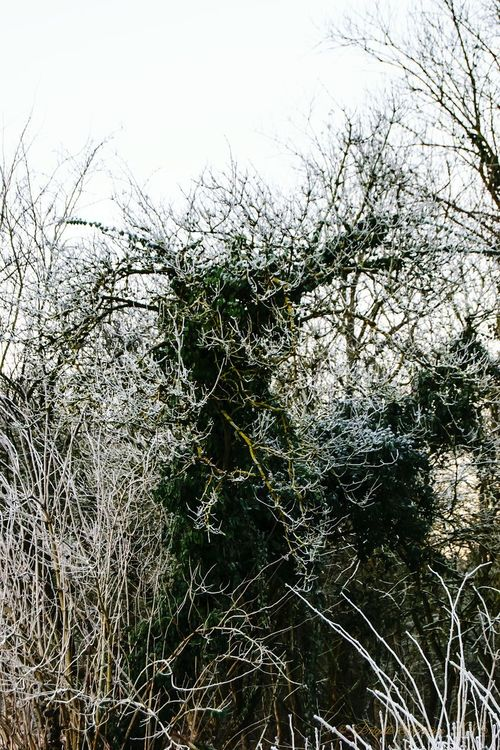 Tree Growth Nature No People Sky Outdoors Low Angle View Beauty In Nature Day Branch Close-up Freezy Morning Early In The Morning Freezing ❄ EyeEm Nature Lover Nature At Your Doorstep Cold Temperature Frosted Grass Frosted Nature Frost Frosted Tree