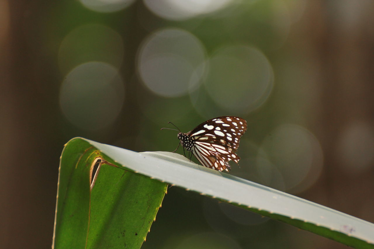 Animal Animal Antenna Animal Markings Animal Themes Beauty In Nature Butterfly Butterfly - Insect Close-up Day Focus On Foreground Fragility Green Green Color Growth Insect Leaf Natural Pattern Nature No People Outdoors Plant Selective Focus Wildlife
