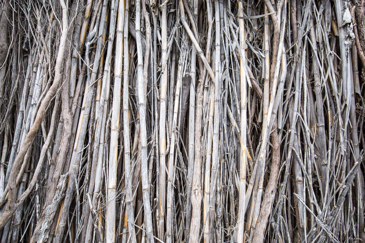 Backgrounds Bamboo Bamboo Fence Bleached Bleached Wood Cane Fence Full Frame Large Group Of Objects Natural Background Natural Pattern Natural Patterns Natural Wall Nature Pattern Repetitive Repetitive Nature Repetitive Pattern Stockphoto Sugar Cane Sugar Cane Fence Weathered Weathered Fence