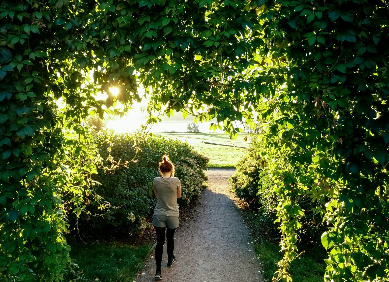 High Angle Rear View Of Woman Walking Amidst Plants In Park