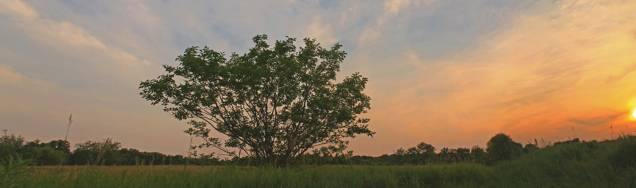 Just walking around a forest preserve area back in illinois in 2014. It was in june 2014 Beauty In Nature Chasing Sunsets Color East Dundee Exposive Color Forest Preserve Illinois June Landscape Nature No People Outdoors Panorama Sky Stitching Images Sunset Tree