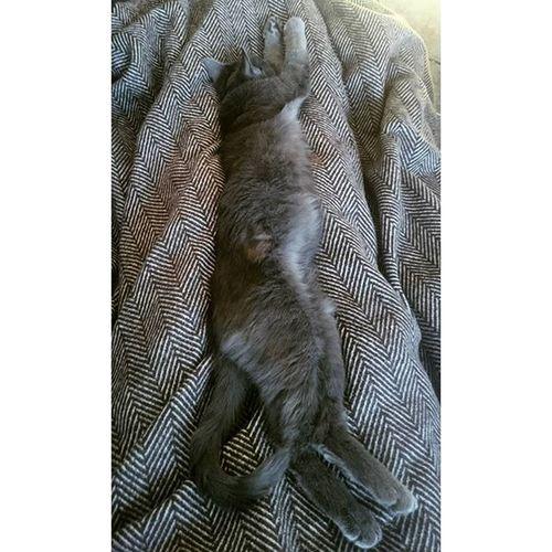 Laaaaaaaange Katze 🐈 Die braune Stelle im Fell ist seltsam, da hatte sie eine Verletzung und ihr Fell ist braun statt grau nachgewachsen o.O Tshaga_the_cat