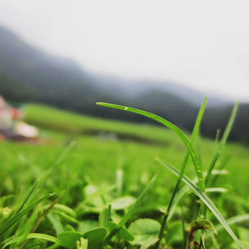 The sharpness of this green blade, the freshness of this benign air, the warmth of this cool scape... CantGoBackToWork IWannaBeHere Vacations Traveler Traveling Travelphotography Travelgram Feelalive Nature Natural Beauty Naturelovers Nofilter Mystical Atmosphere Mystic Mysticbeauty Greenery Timestandsstill