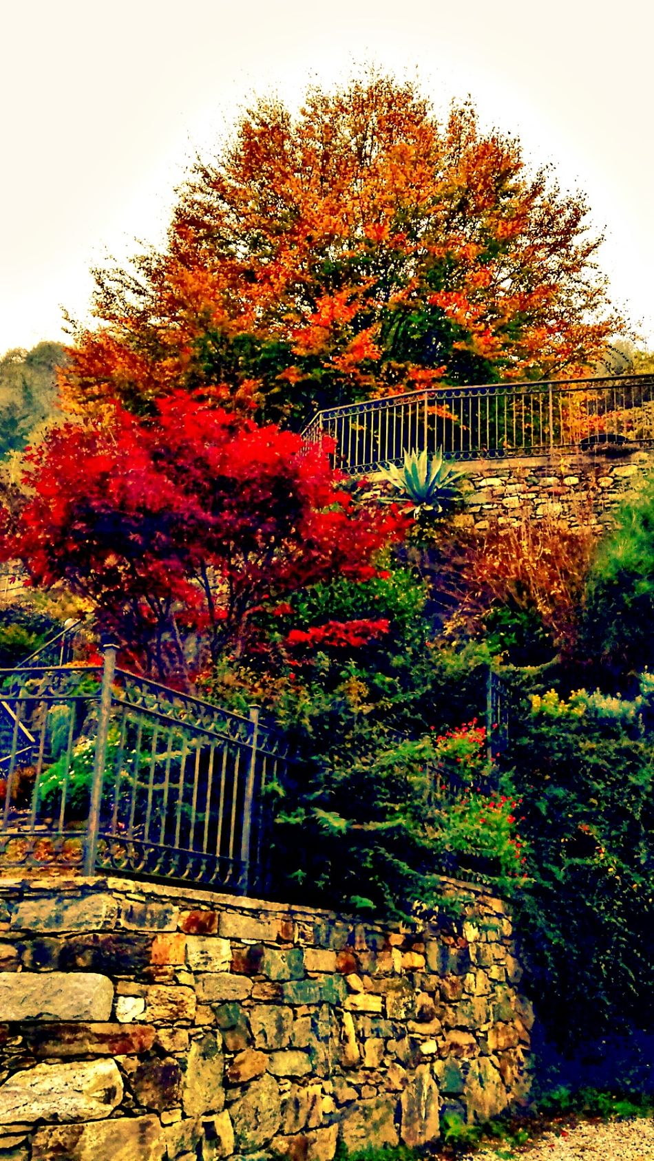 Colors Of Autumn Autumn🍁🍁🍁 Autunno Autumn Colors Colori Landscape Paesaggio Nature Day Beauty In Nature No People Filter Filters Effect Effects & Filters Effects Colorization Autunno Artistico Autunnodigitale