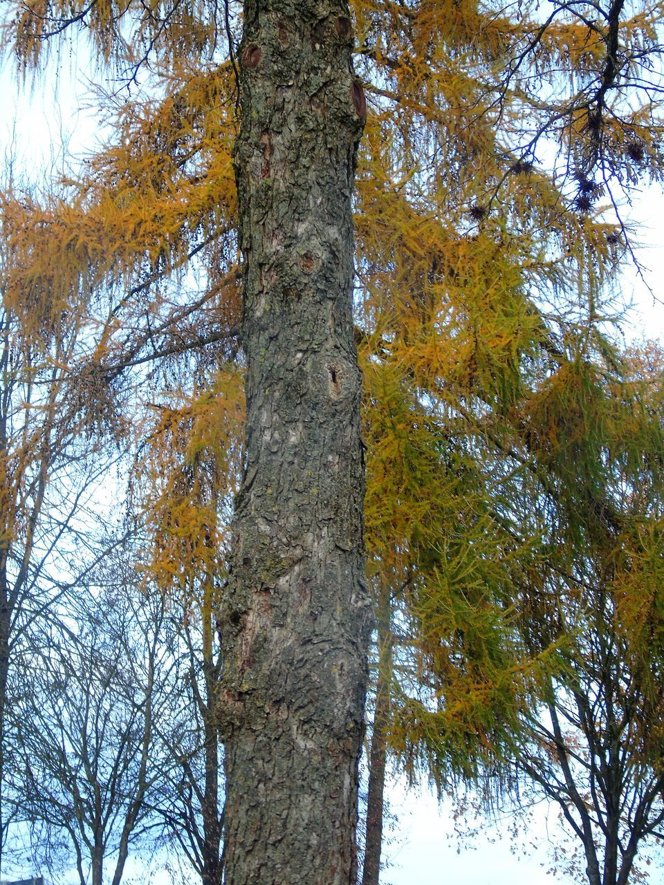 tree, tree trunk, nature, low angle view, forest, beauty in nature, day, growth, branch, outdoors, no people, autumn, scenics, tranquility, leaf, sky