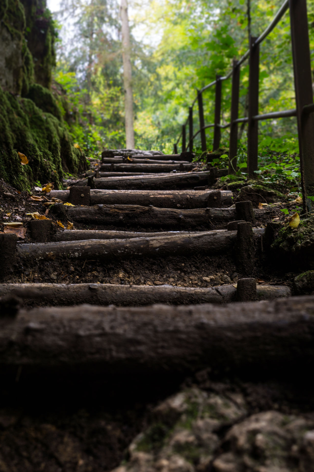 Stairway to ... Climb Day Forest Foreward Frog Perspective Hard Way Move Nature Nature Stairway No People Outdoors Path Rough Route Staircase Stairway Stairway To Nature Stairway To Nowhere Stairways Steps Steps And Staircases The Way Forward Tranquility Tree Up