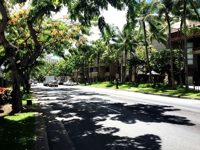 Transfer city---Honolulu Walking Around