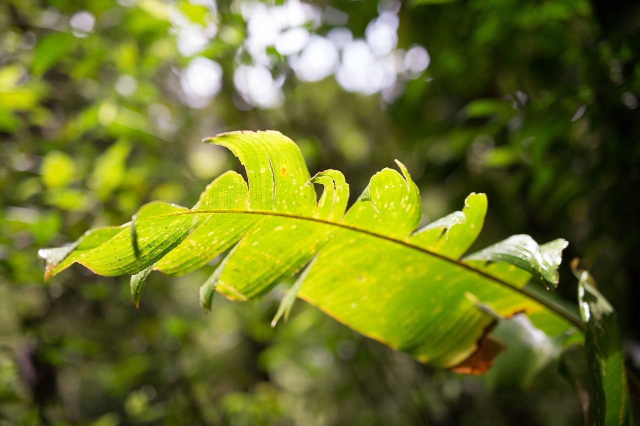 Beautiful stock photos of rainforest, Botany, Close-Up, Damaged, Day