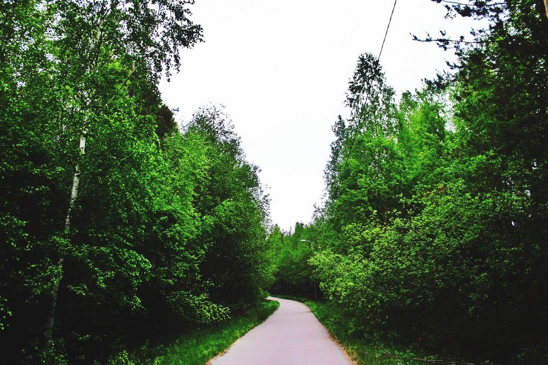 Tree Nature Green Color Clear Sky Outdoors Forest Day Beauty In Nature Something Wood Landscape Canon500d Canonphotography Photographing Finland_photolovers Capture Freshness