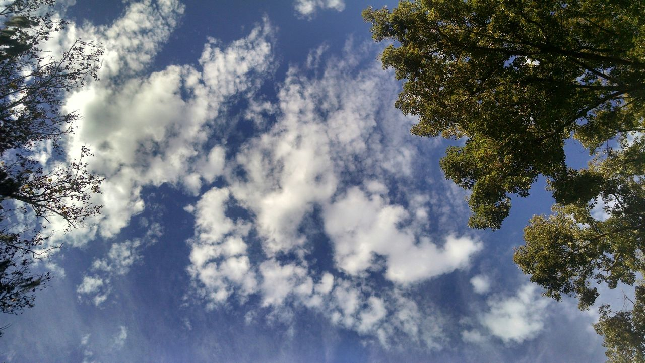Straight up JacksonvilleFL Clouds And Sky Nature