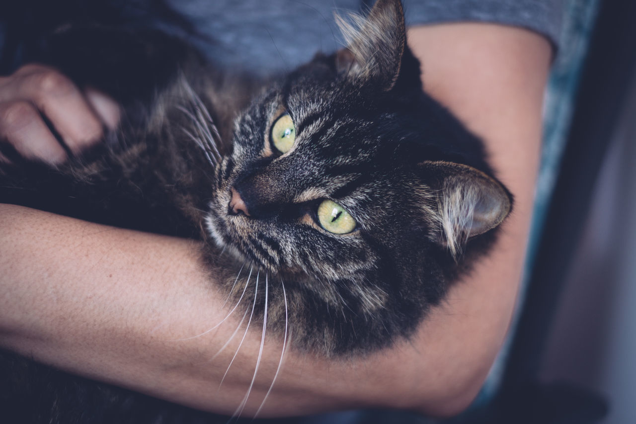 Adult Animal Themes Close-up Day Domestic Animals Domestic Cat Feline Human Hand Indoors  One Animal One Person Pets Portrait Real People Whisker Yellow Eyes