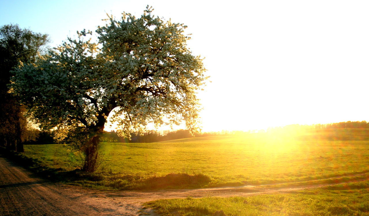 Canon Tree Nature Sunset Sunlight Beauty In Nature Field No People Landscape Sky Single Tree My View Outdoors Full Frame Art Landscapes Background Backgrounds Art Photography Poland Warmia And Mazury Warmia Polska Cloud - Sky Dreamer's Vision Artistic