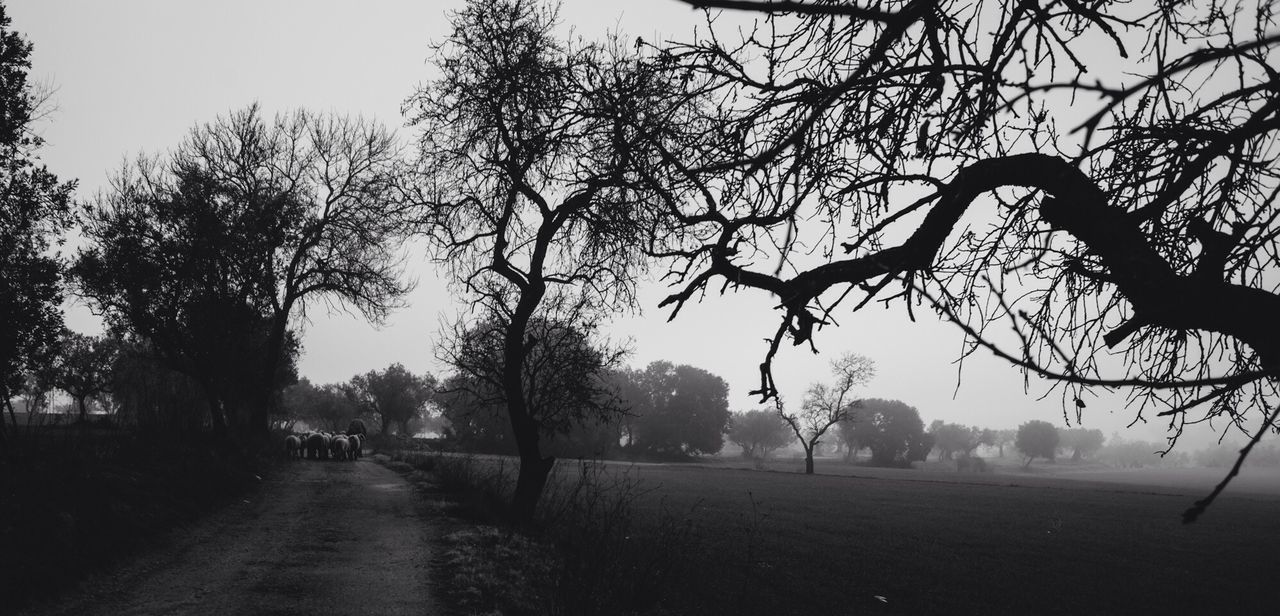 Walking Around EyeEm Nature Lover Landscape Blackandwhite