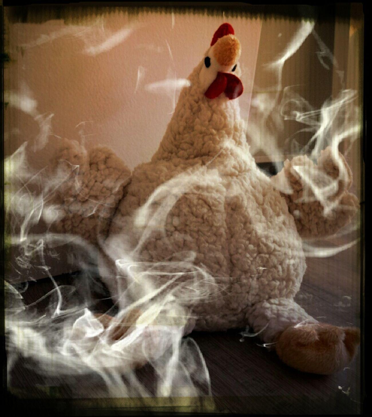 Ich Wär So Gern Ein Huhn... Suppenhuhn Für Alle!!