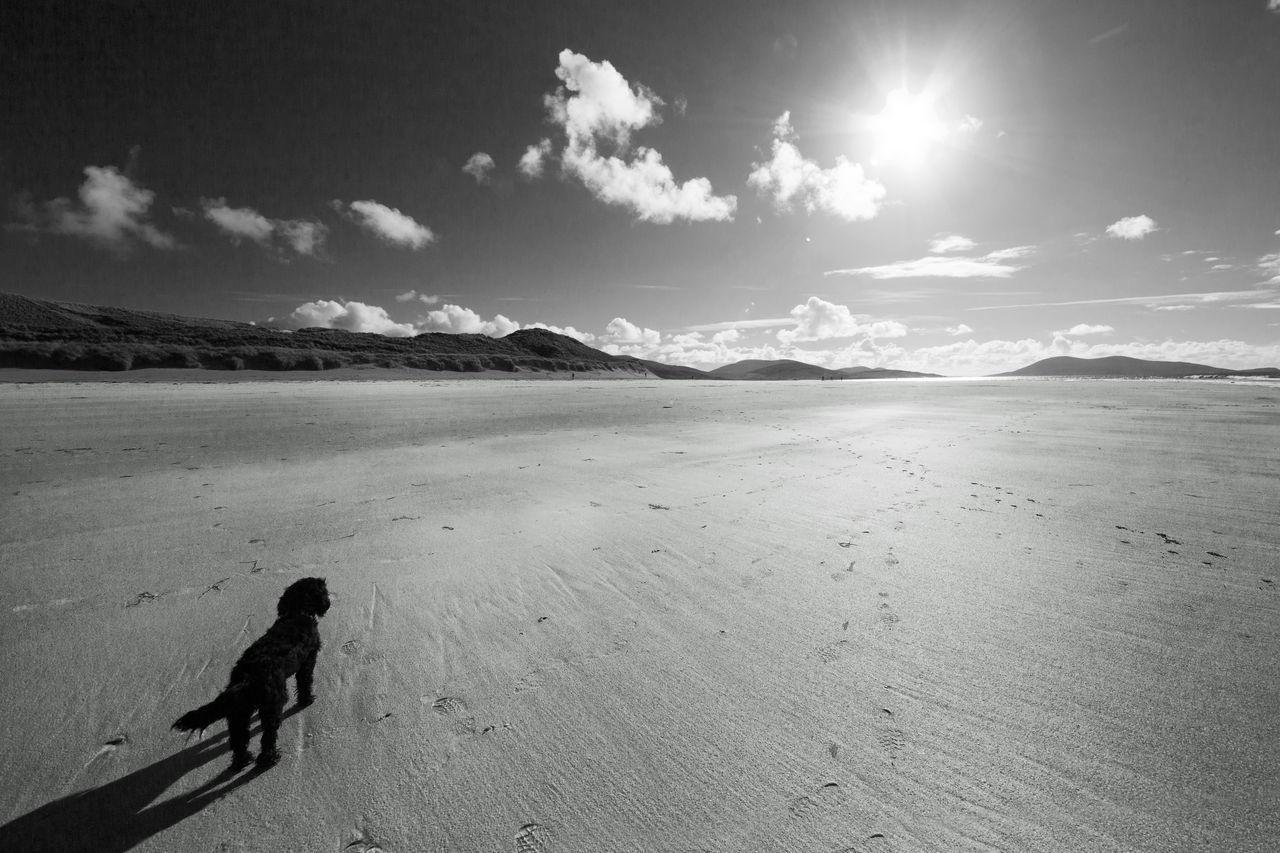 Beach Beauty In Nature Blackandwhite Photography Dog EyeEmNewHere Isle Of Harris Landscape Luskentyre Beach Nature Outdoors Sand Scottish Scenery Sky Sunlight
