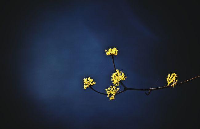 Sansuyu Sansuyu Flower Close-up Beauty In Nature Nature Photography EyeEm Nature Lover Yellow Flower Photography Flower Collection Flowers