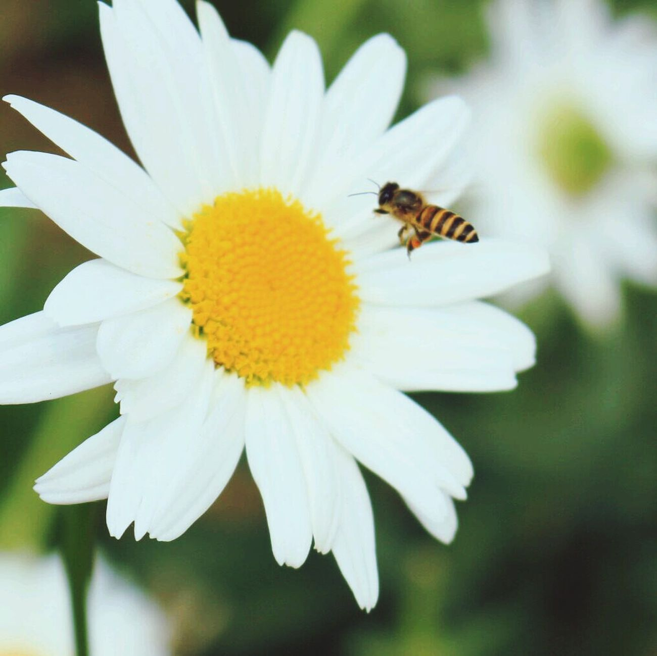 Good morning ??? Flowers Bee 🐝 Photography Macro