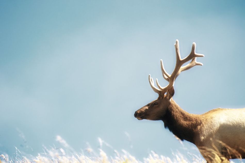 Beautiful stock photos of deer, Animal Themes, Animals In The Wild, Copy Space, Day