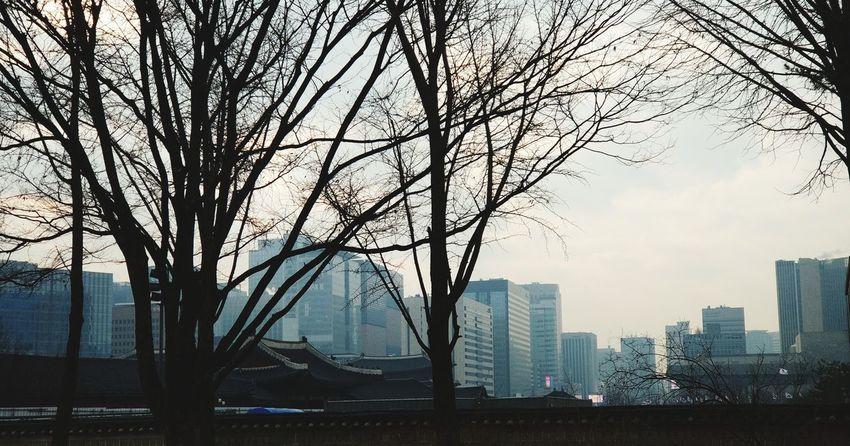 Skyscraper Cityscape Urban Skyline City Architecture Modern Tree