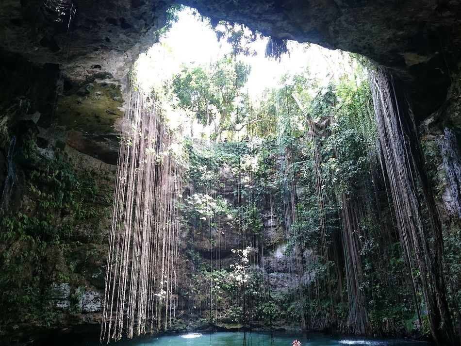 Water Drop Close-up Low Angle View Sky Fragility Tree Indoors  No People Wet Freshness Day Nature Cenote Cenotes
