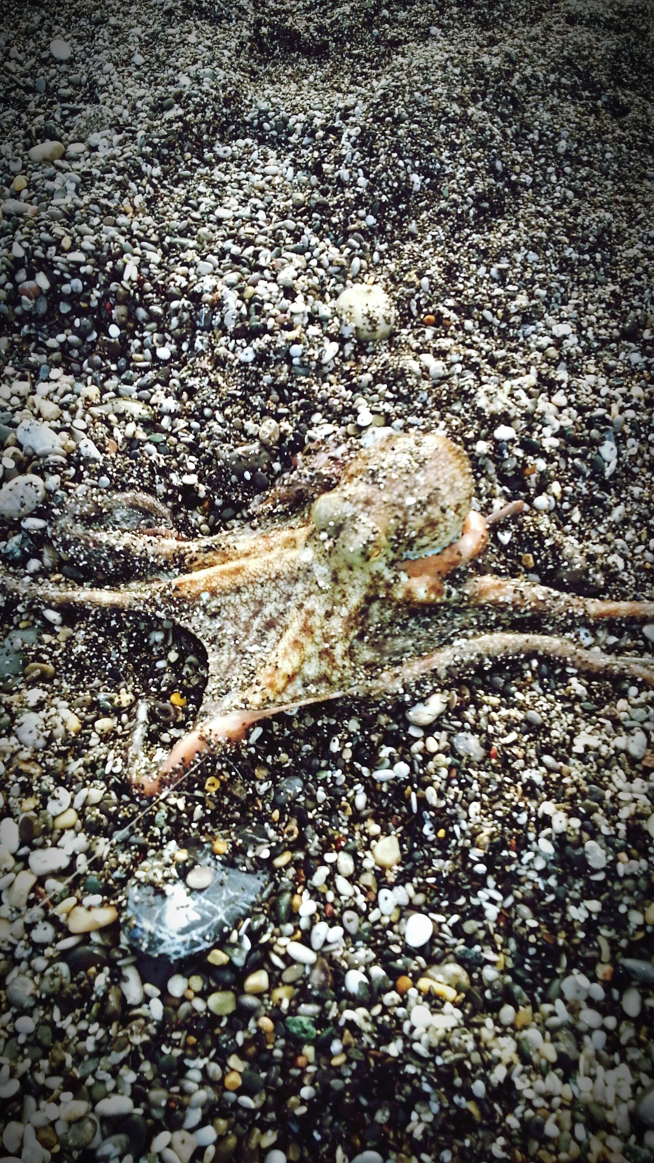 Today's Catch Octopus Fishing Yummy♡ Being A Beach Bum Life Is A Beach Alive  Enjoying Life Relaxing Time Philosophie