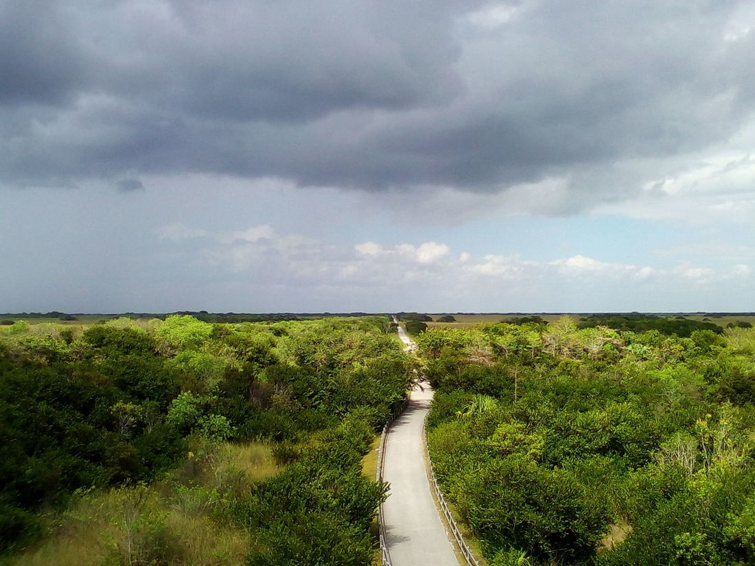 Beauty In Nature Cloud - Sky Day Field Grass Green Color Growth Landscape Nature No People Outdoors Plant Road Scenics Sky The Way Forward Tranquil Scene Tranquility Transportation Tree Water Everglades  at Shark Valley Observation Tower