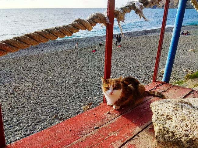 Sea cat Animal Themes One Animal Beach Nature Water Crimea Cat Pets Cats Of EyeEm Mammal Domestic Animals Outdoors Sand Day