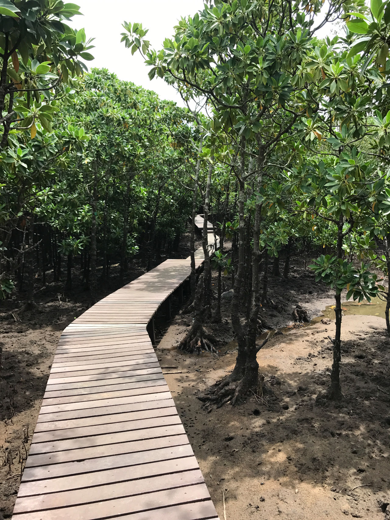 Tree Travel Photography Nature No People IPhoneography Mangroves Mangrove Forest Beauty In Nature Mangrove Forest