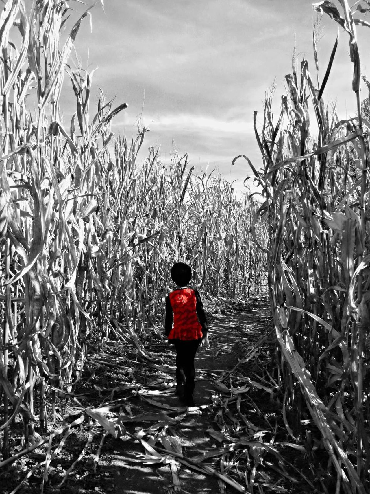 Beauty In Nature Corn Cornfield Day Exploration EyeEm New Here Full Length Live For The Story Mystery Nature One Person Outdoor Photography Outdoors People Real People Rear View Red Selective Color Sky Standing Streetphoto_bw Tree Walking