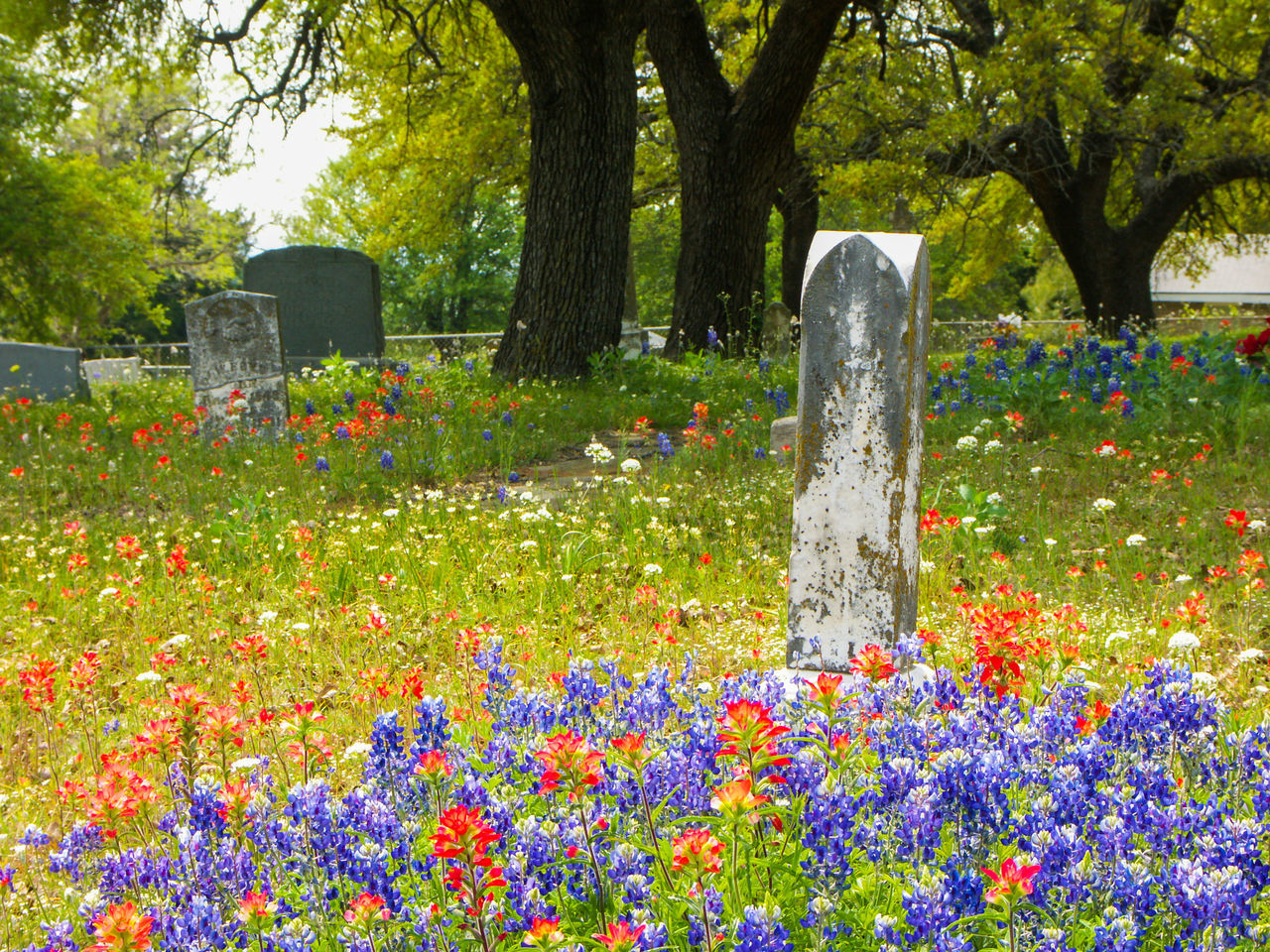 Texas graveyard in the spring with bluebonnets and indian paintbrush Bluebonnets Cemetary Cemetery Cross Day Flower Grave Graveyard Graveyard Beauty Headstone Memorial No People Outdoors Respect Spring Summer Texas Tomb Tombstone