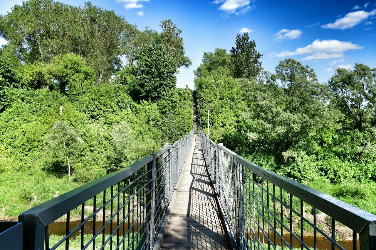 волшебныйлес природабелоруси река природа, река, красиво зелень  лес и природа Белоруссия леснаясказка Лес мост