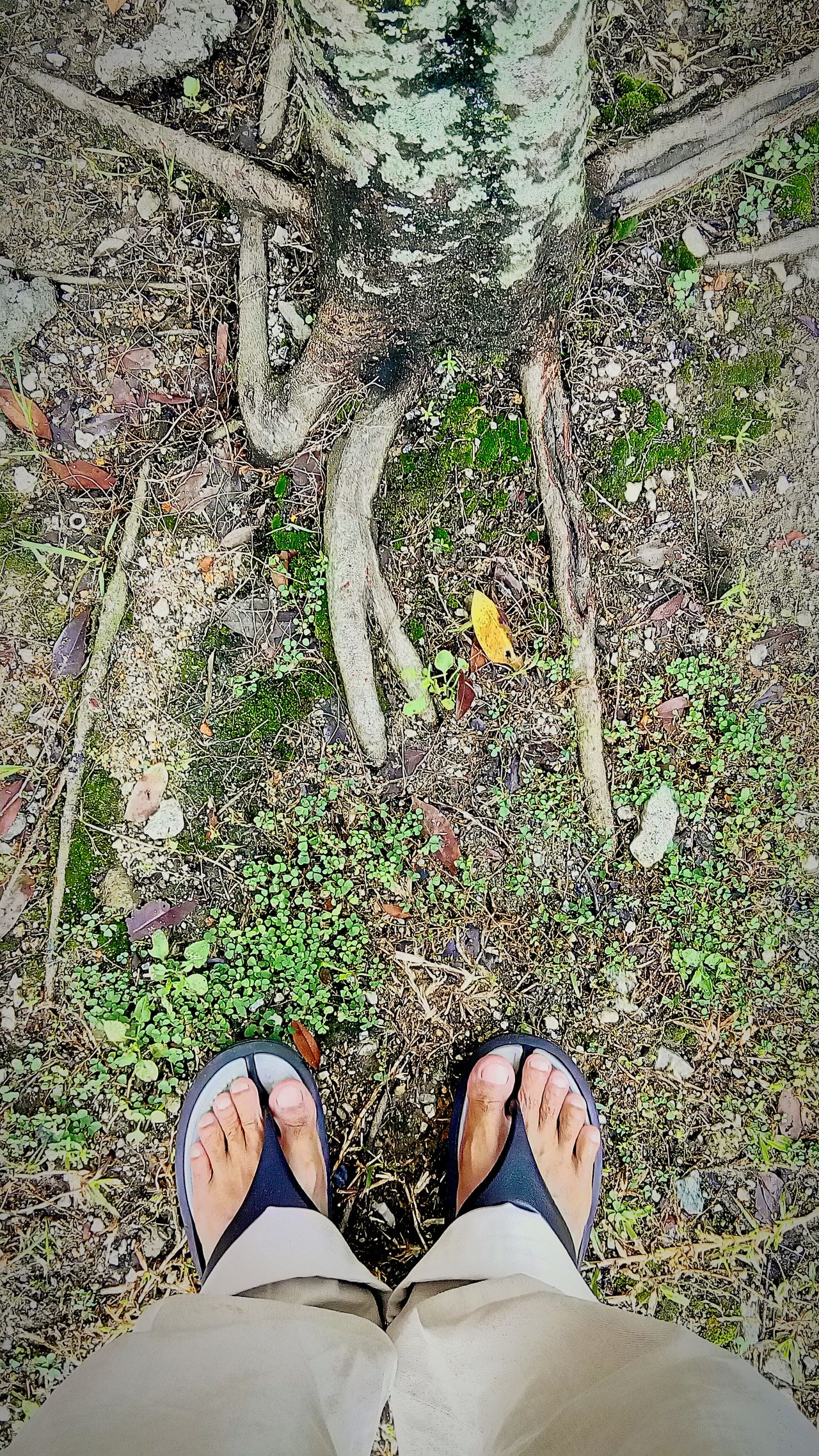 Outdoors Personal Perspective EyeemPhotos Two Is Better Than One Tree Nature Stand Up Foot