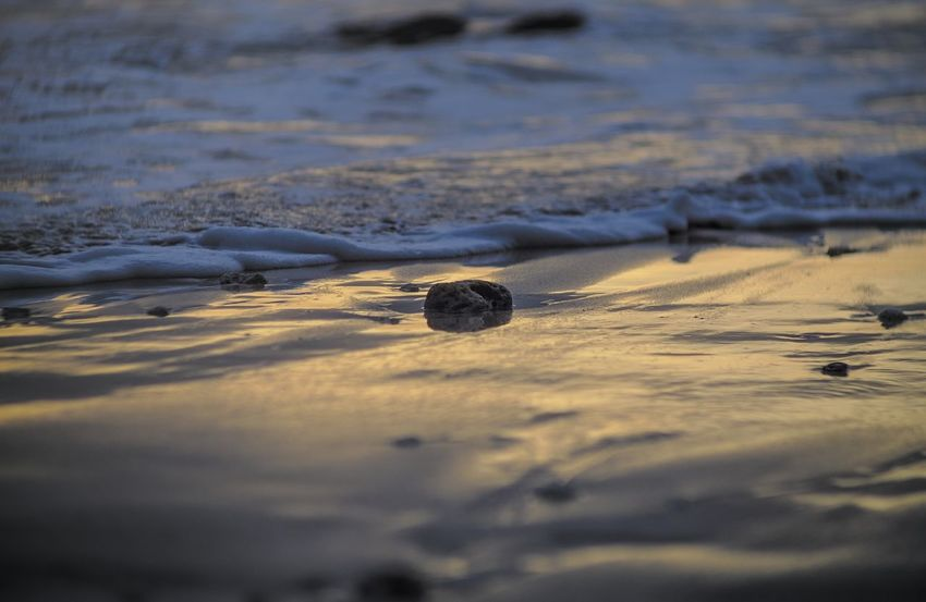 Water No People Beach Sand Day Nature Outdoors Shadow Animals In The Wild Close-up Rock Sand Texture Sunset Wet Sand Wet Sand Reflection Sea Small Stones Stone Wet Stone