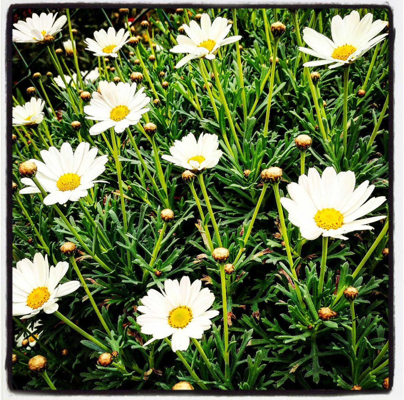 VillaGuardia Imperia Liguria Italy Springtime happy flowers sun🌸☀