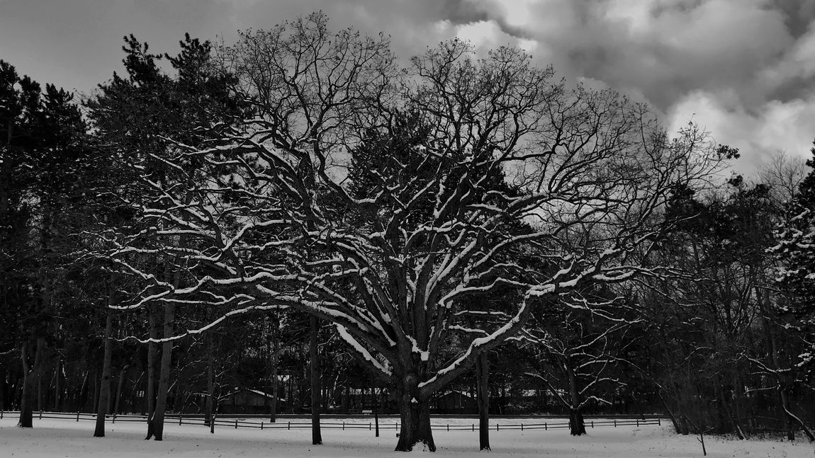 IPhone 7 Plus IPhoneography Snow Covered Blackandwhite Peaceful Tree Bare Tree Winter Snow Nature Cold Temperature Branch Beauty In Nature Tranquility Sky