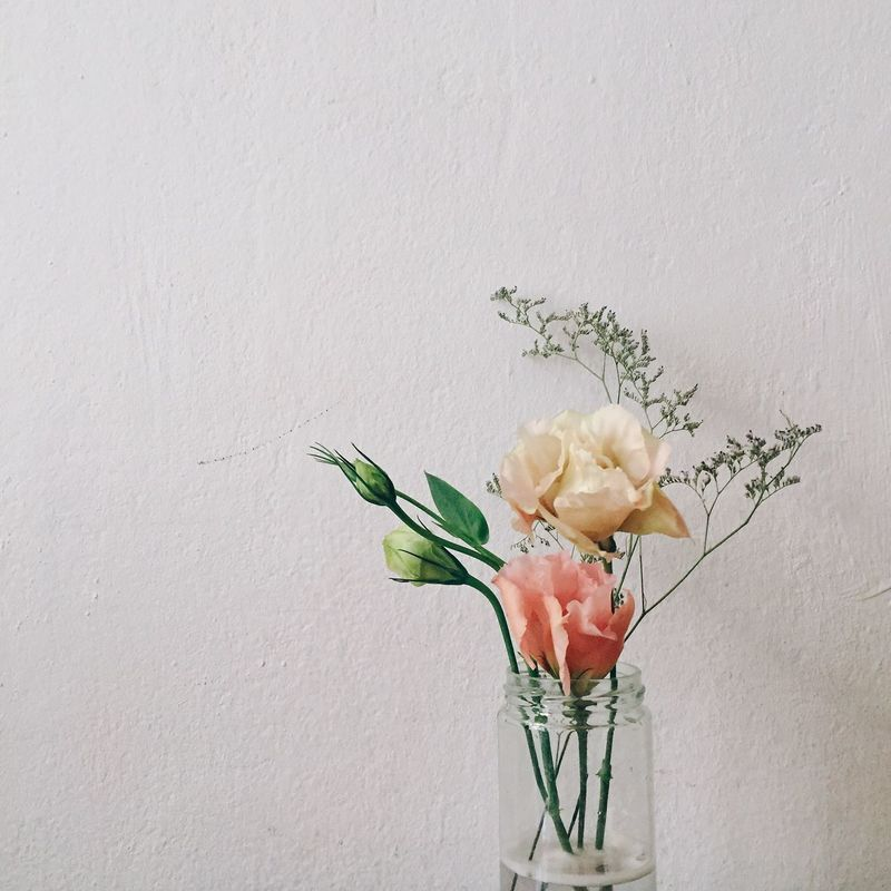 Flower Freshness Growth Plant Studio Shot Nature Vegetable Close-up No People Beauty In Nature Flower Head Indoors  Day Lisianthus Lisianthus Eustoma