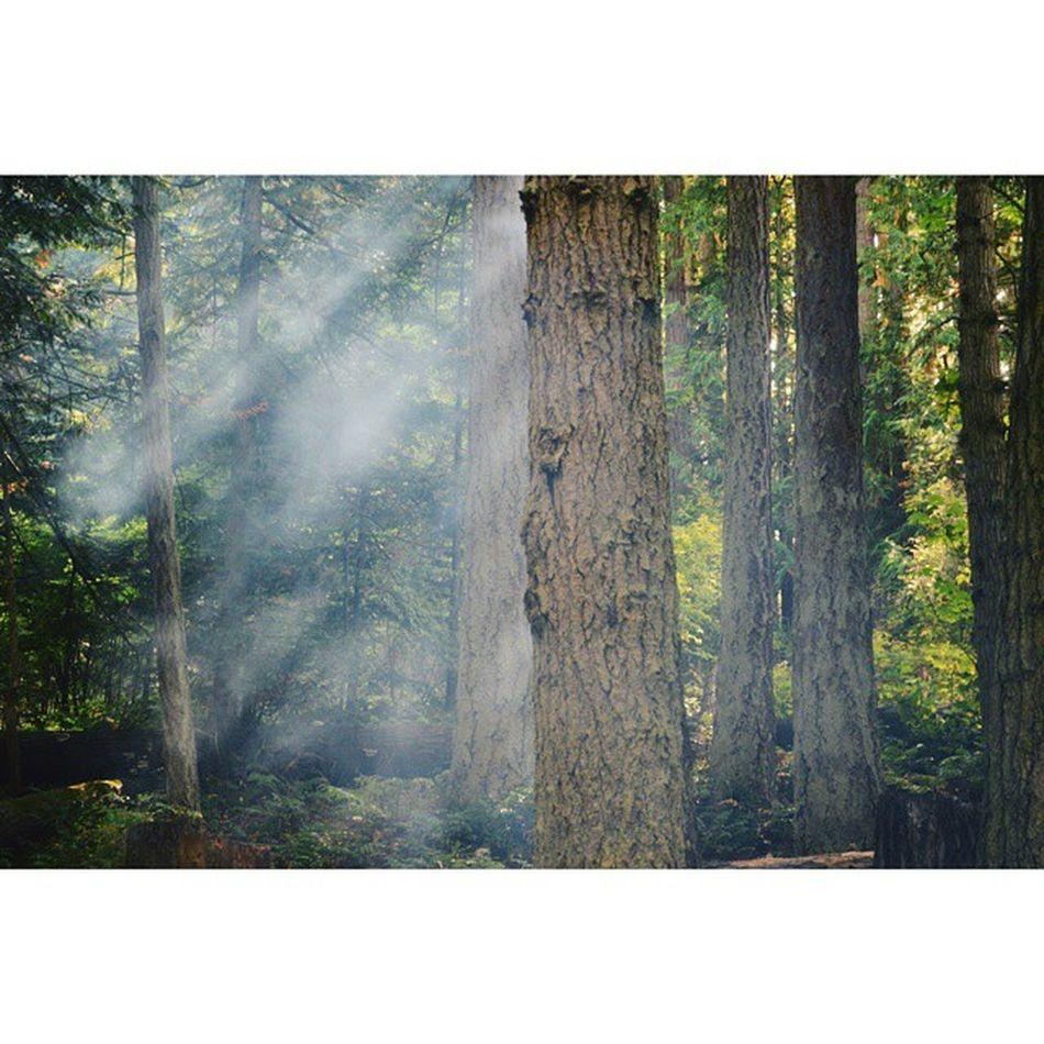 Smoke and sun rays. PNW Thegreatpnw Getoutmore Goexplore Washingtonstate Vscocam VSCO Olympicnationalpark