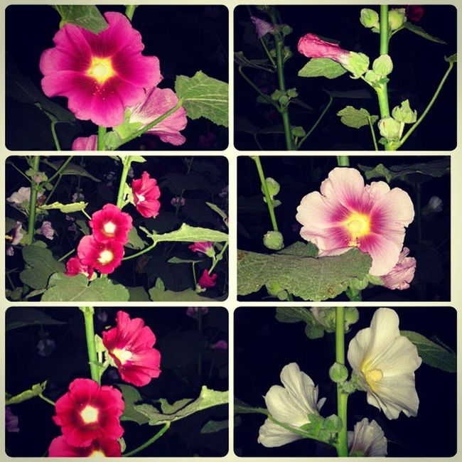 Flowers From  Different Trees Different Flowers Instalatenightupdate Instashare Share4 Like Followme .