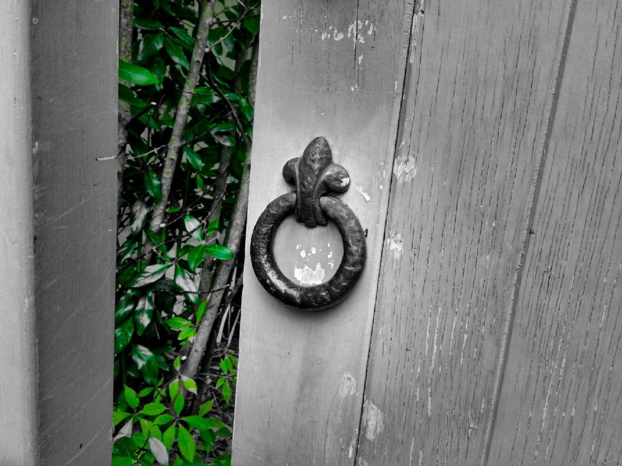 Knock knock... Architecture Hedge Colour Image Showcase March Formal Garden Outdoor Photography Colorsplash Wooden Structure Gate Doorway Green No People Vertical Walls My Point Of View Rear View New Zealand Hamilton NZ Close-up Autumn 2016 Sublime Edits Iron - Metal Knocker Exterior Pattern, Texture, Shape And Form