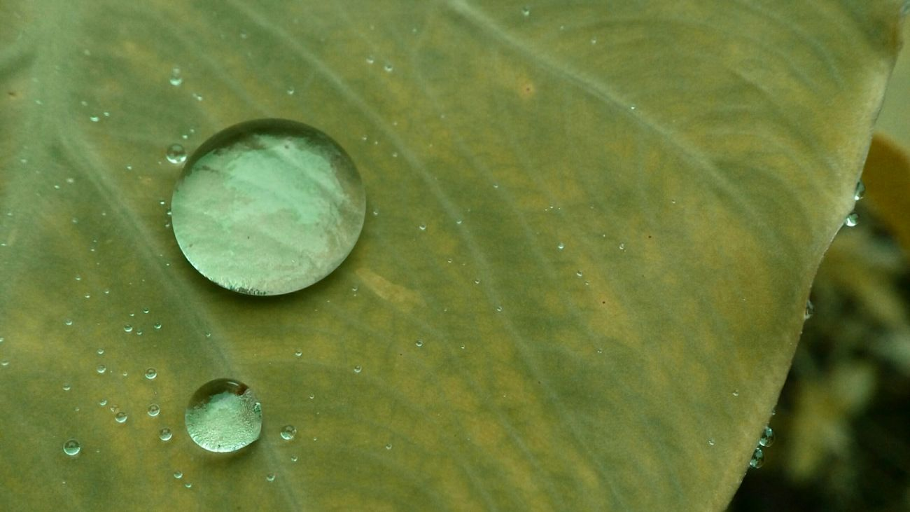 Two Is Better Than One Macro Macro Water Drops Macro Photography