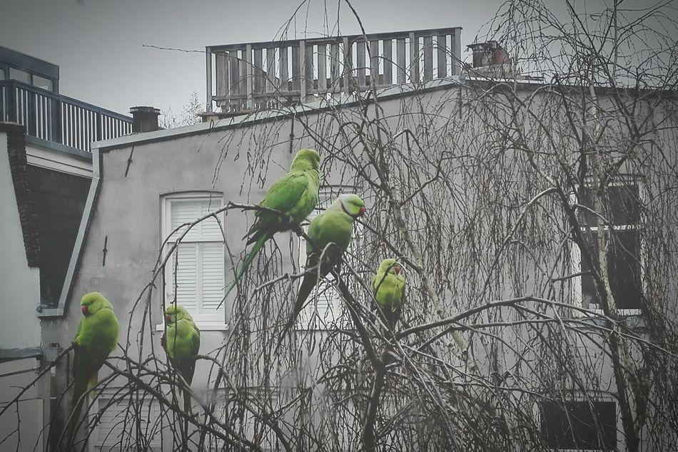 Neighbours Quest