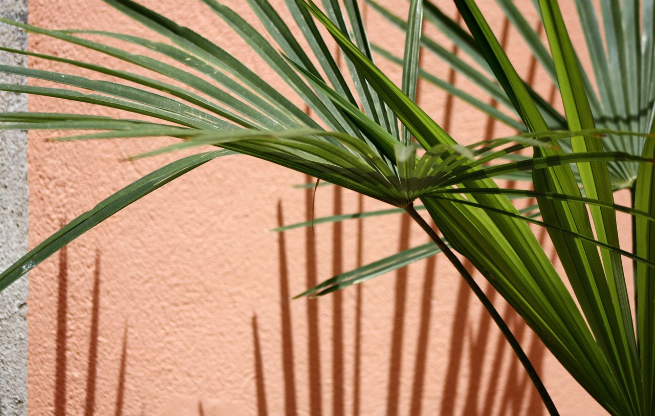 Simple o'clock. Nature Nature_collection Outdoors Palm Tree No People Close-up Plant Simplicity Minimalism Minimalplanet Minimalobsession Light And Shadow Taking Photos Shootermag Live For The Story EyeEm Best Shots