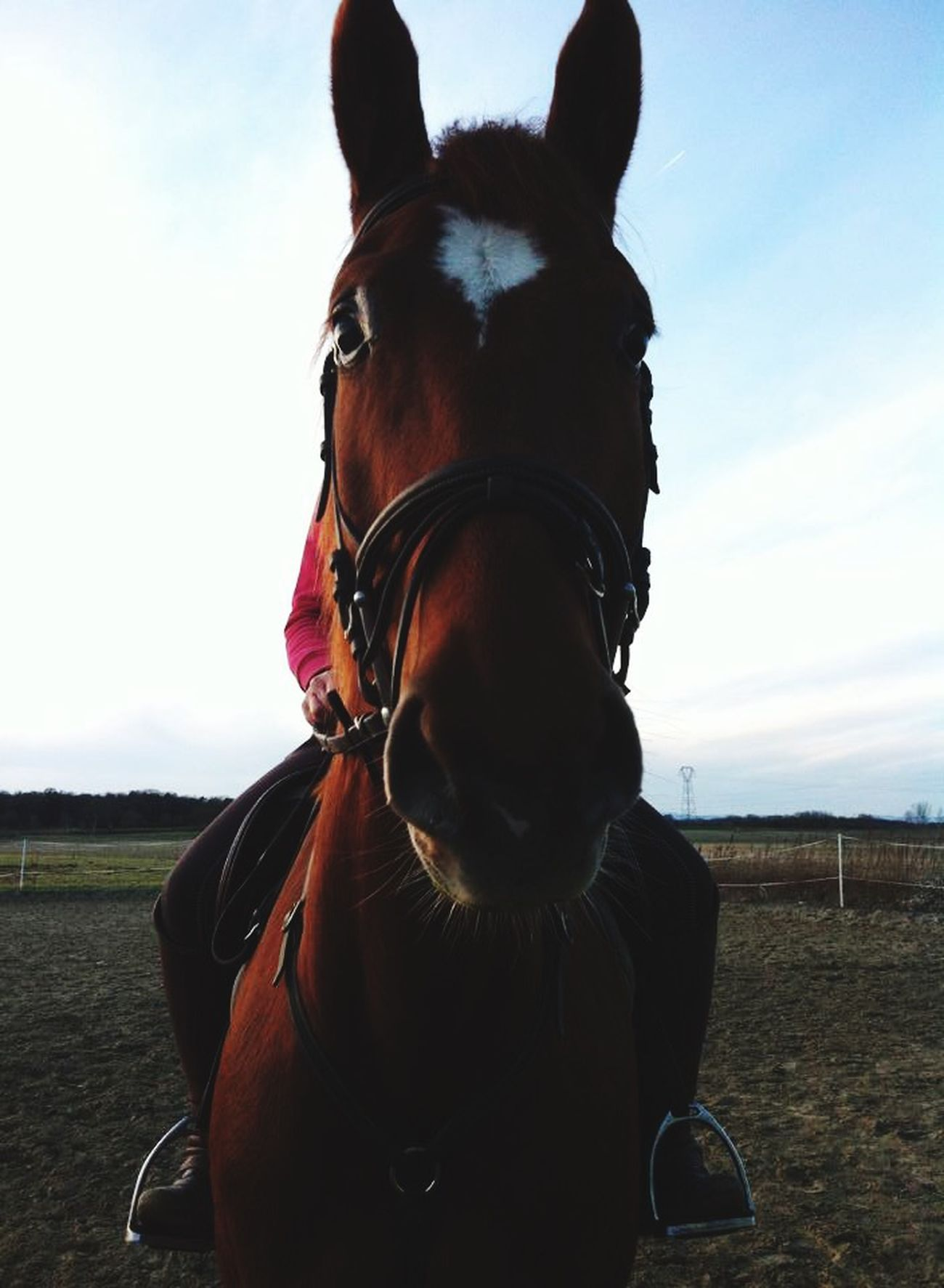 My beauty!Forever different ;) Horses Horse Horse Riding Kiyomi Mitsuki