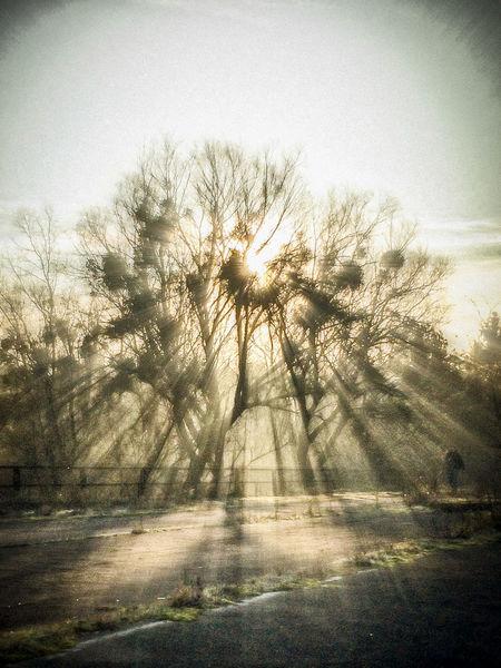 Sun glares on my jogging track Beauty In Nature Glares Idyllic Jogging Track Morning Mystery Nature Non-urban Scene Outdoors Sun Sun Glare Tranquil Scene Tree Tree