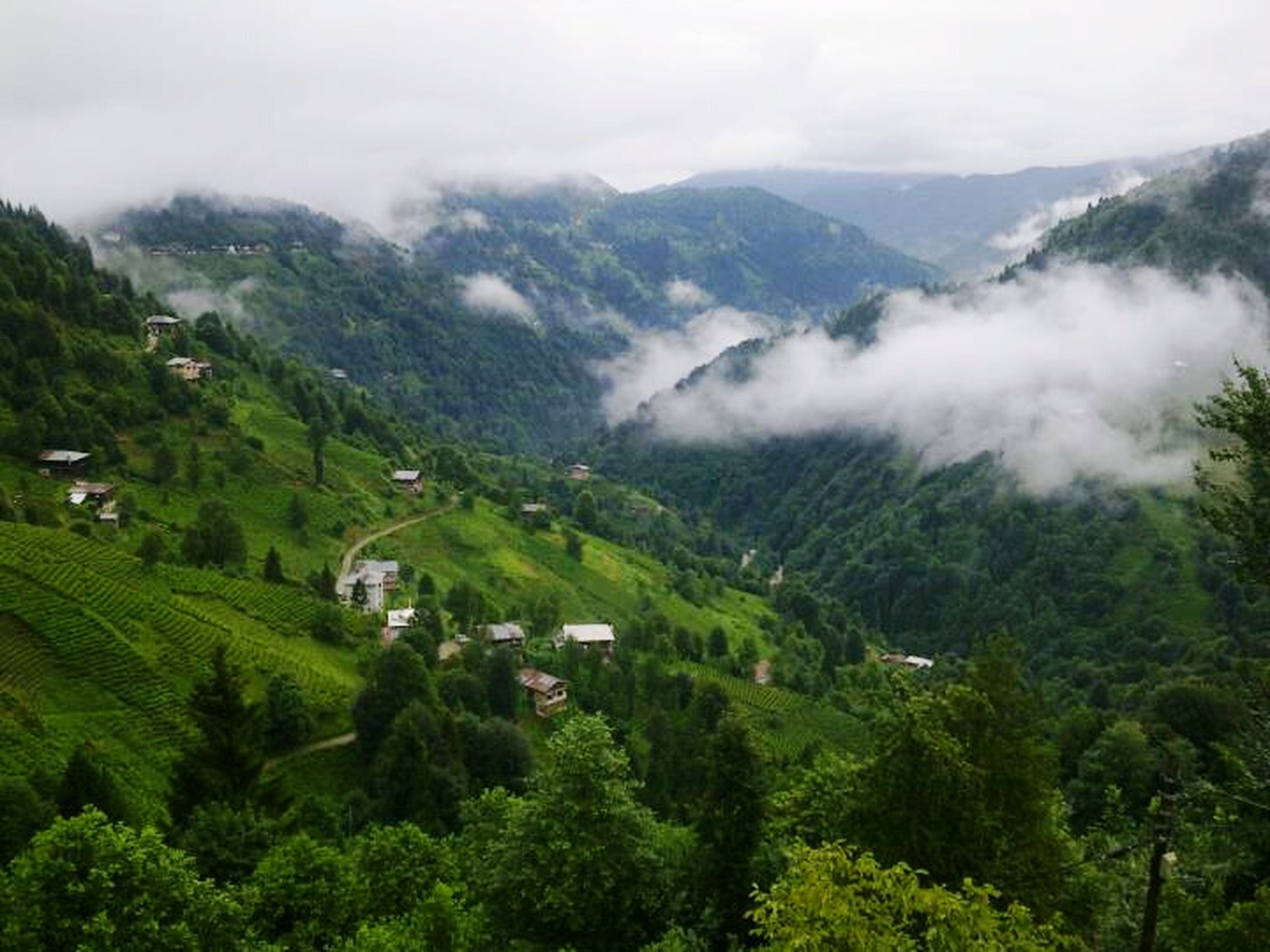 mountain, tree, scenics, tranquil scene, landscape, green color, tranquility, beauty in nature, lush foliage, high angle view, nature, mountain range, growth, sky, valley, forest, fog, non-urban scene, idyllic, green