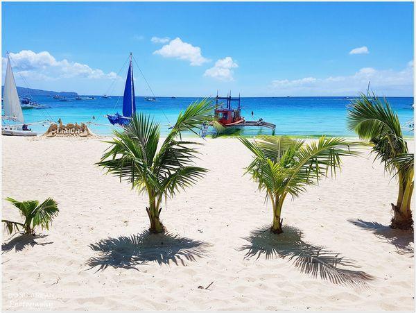 Beach Boracay BoracayIsland Crystal Clear Paradise Coconut Palm Tree Bestbeachesintheworld