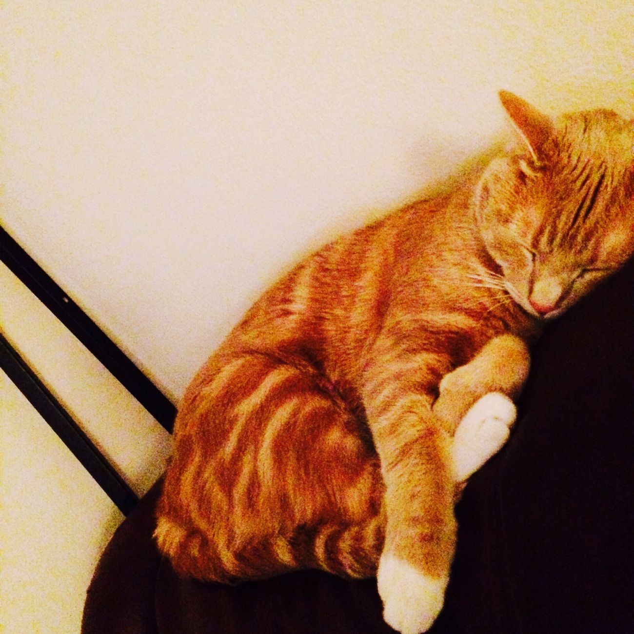My Cat Nappingm] #Napping TheCatLife 😸