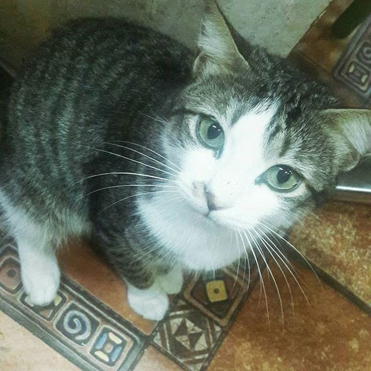 Cat Maroc Bogoss