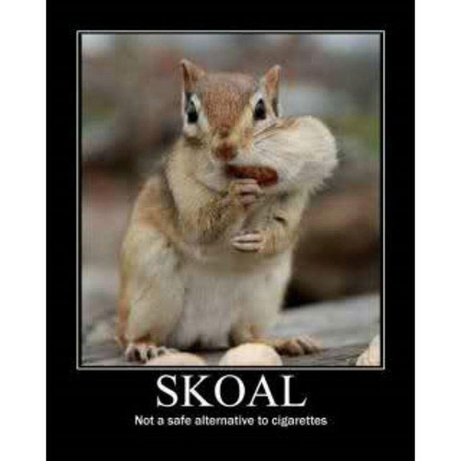 cigarette > skoal Cigarette  Skoal ~~~~